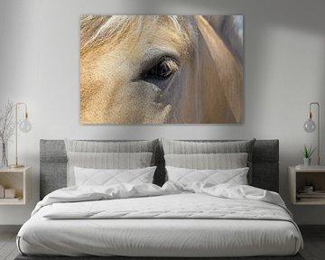 Pferdeauge von Norman Krauß