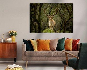 Hirsche im Wald von Vincent Keizer