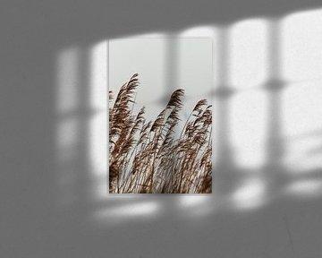 Reed. Photographie d'art. Décoration murale. Tonalités d'humeur et de terre sur Quinten van Ooijen