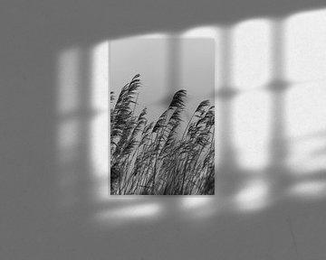 Reed. Photographie d'art. Décoration murale. Noir et blanc et lunatique sur Quinten van Ooijen
