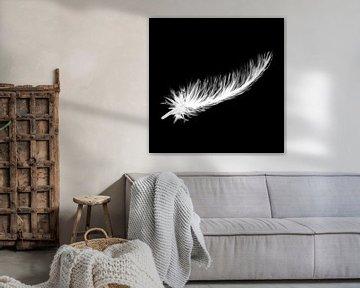 Schwarze Leinwand - weiße Daunenfedern von Emiel de Lange