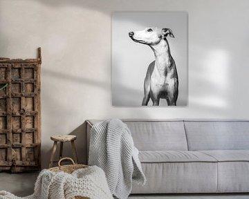 Künstlerisches minimalistisches Porträt eines Windhundes von Lotte van Alderen