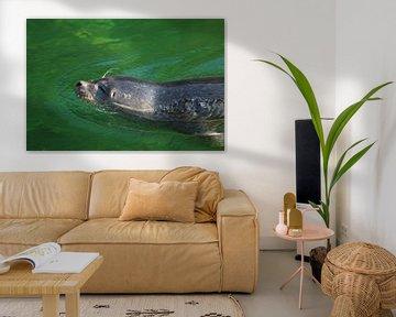 Junger Seehund von Ines Porada