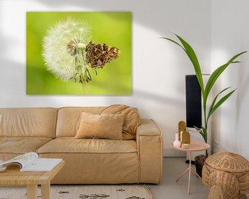 Dane auf einer Pusteblume von Thijs van den Burg