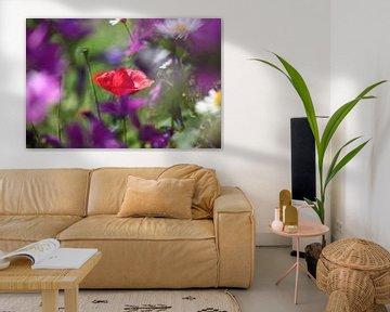 Klaproos in bloemenveld van Kurt Krause