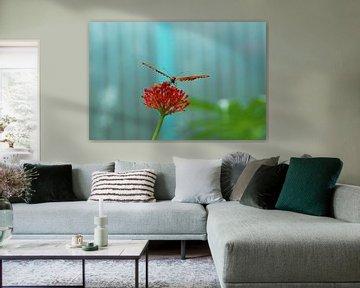 Schmetterling auf Blume von Agnes Meijer