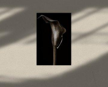 Calla Lilie - In Stein III von Steffen Sebastian Schäfer