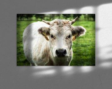 Die Kuh von Julien Meijer