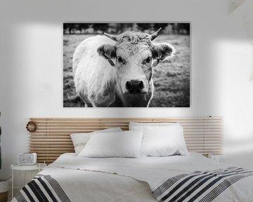Die Kuh (schwarz und weiß) von Julien Meijer