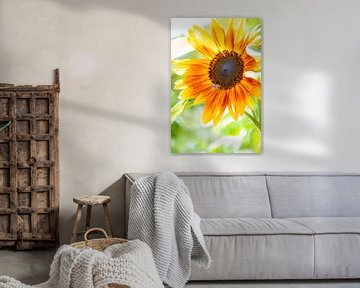Sonnenblume mit Biene von Thomas Heitz