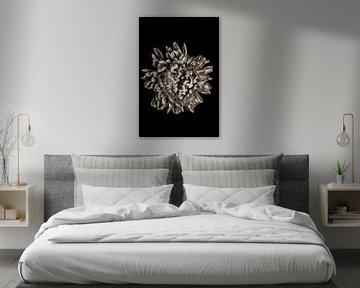 Chrysantheme Blüte Schwarzweiß von Steffen Sebastian Schäfer