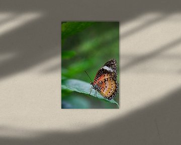 Schmetterling (Cethosia Biblis) auf grünem Blatt von Sandra de Heij