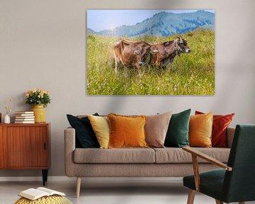 Kühe auf der Weide von Thomas Heitz