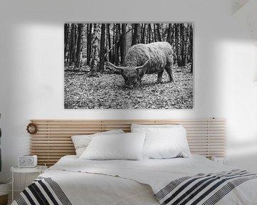 Schottischer Highlander | Bussemerheide | Natur | Kunst | Kunstdruck von Mascha Boot