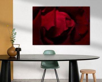 Die Rose II von Joran Quinten