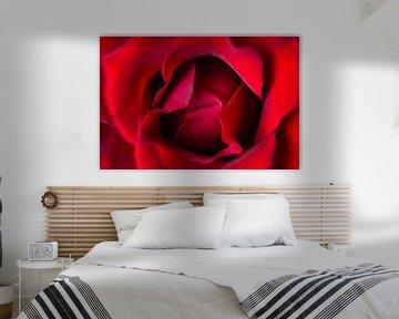 Herz einer Rose von Joran Quinten