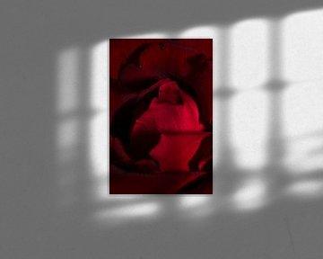 Die Rose II - Stehend von Joran Quinten