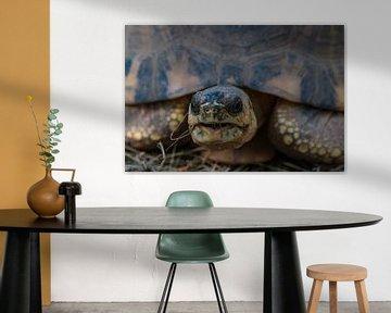 Schildkröte von Thomas Heitz