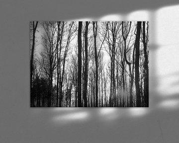Winterwald mit untergehender Sonne von Jan Fritz
