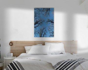 Bomen van Nuance Beeld