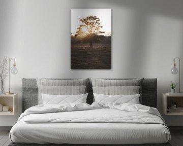 Baum Wezepsche heide von S van Wezep