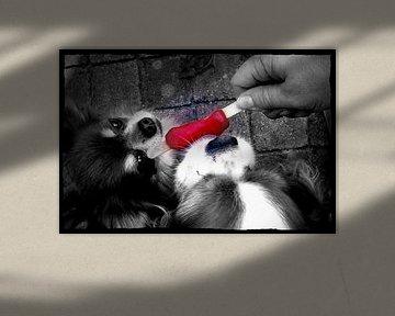 Sweet Dogs von Nicky`s Prints