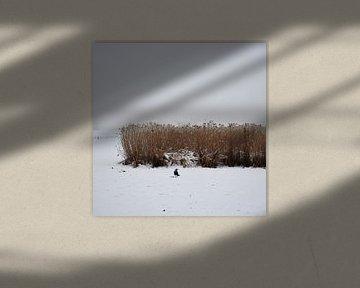 Le corbeau au champ de maïs sur Lena Weisbek