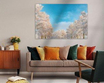 Besneeuwde winterbomen met een prachtige blauwe lucht van Sjoerd van der Wal