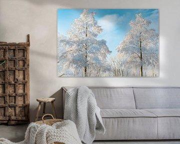 Besneeuwde bomen met een blauwe lucht in de achtergrond van Sjoerd van der Wal
