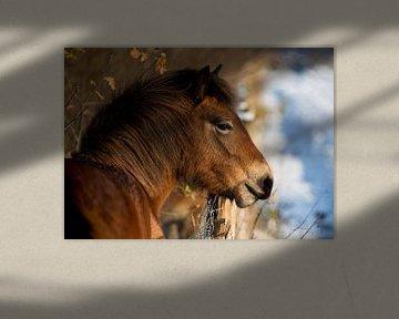 Paard in winterlandschap van Marcel Kerdijk