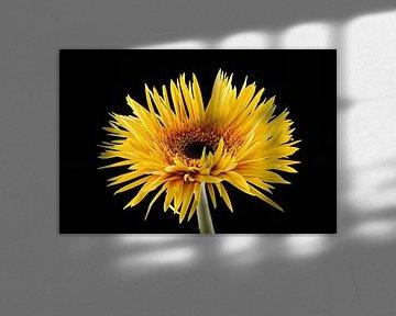 Gerbera Gelb von Tanja van Beuningen