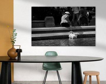 Dog in Central Park New York City van Marcel Kerdijk