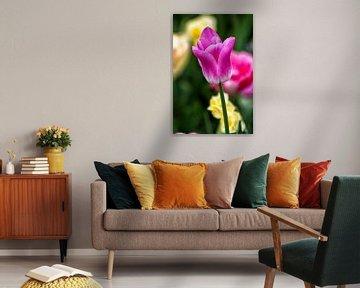 Tulpe von Dik Wagensveld