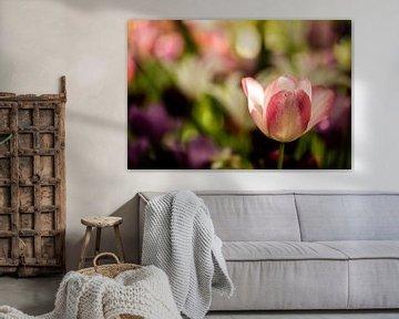 rosa weiße Tulpe mit mehreren Blumen im Hintergrund von Margriet Hulsker
