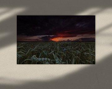 Dreigende lucht boven tarweveld. van Marcel Kerdijk