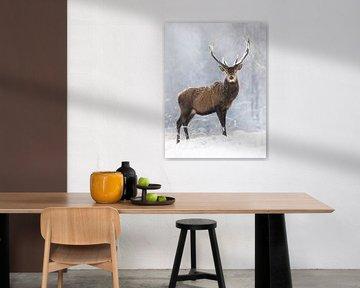 Ein stolzer Hirsch im Schneetreiben von Daniela Beyer