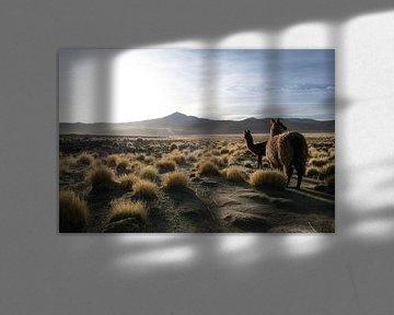 Sonnenaufgang auf dem bolivianischen Altiplano von Lucas De Jong