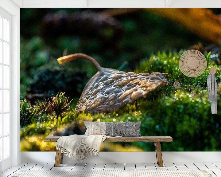 Sfeerimpressie behang: Ochtenddauw op herfstblad van Fotografiecor .nl