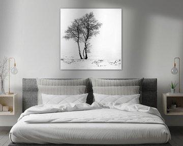 Minimalbäume von Guy Lambrechts