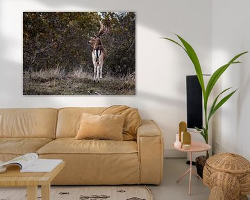 Stehende Hirsche in den Dünen von Sharon de Groot
