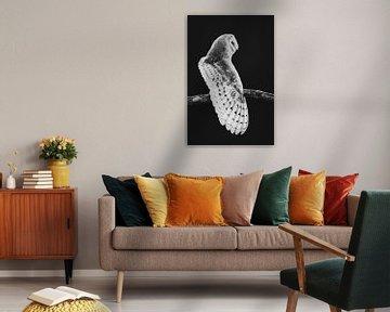 Künstlerisches Porträt der Schleiereule in schwarz und weiß von Lotte van Alderen