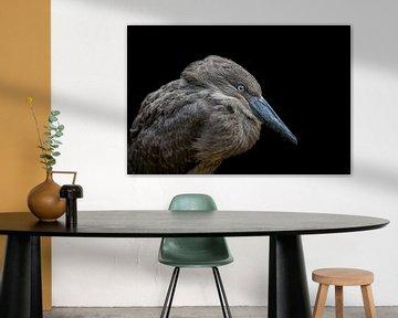 Hamerkop vogel portret