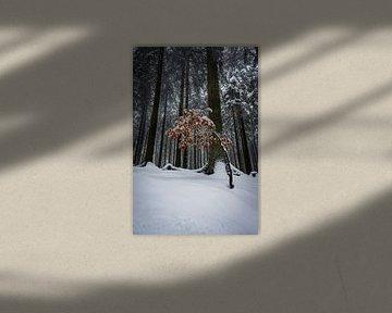 Wees anders - winterlandschap van Jens Sessler