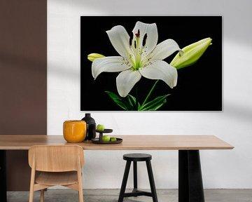 Große weiße Lilie in voller Blüte von JM de Jong-Jansen