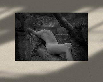In den Bäumen von Stephen Young
