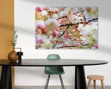 Witte en Roze Bloesems van Soetkin's Photography