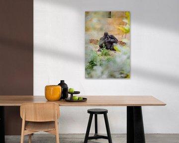 Gorilla in de zomer van Soetkin's Photography
