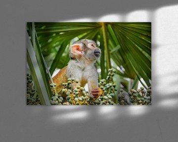 Aapje tussen de palmen van Soetkin's Photography
