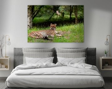 Gepard von Johan Honders