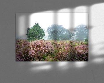 Heideveld in de mist